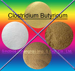 China Clostridium Browns 10BI CFU/G Butyricum-Zufuhr Probiotics für Tiere SEM-CB10BI usine